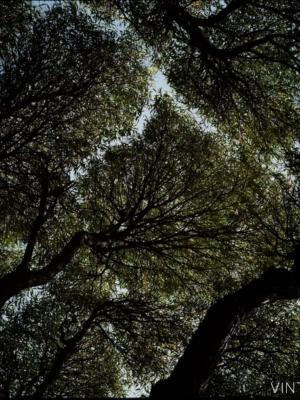 """Купить для интерьера на стену Постер """"Санкт-Петербург. Деревья на Каменном острове"""""""