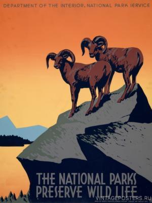 """Купить для интерьера на стену Постер """"Национальные парки сохраняют дикую жизнь"""" Нью-Йорк 1936"""