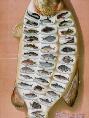 """Купить для интерьера на стену Постер """"Аллен и Гинтер: 50 рыб из американских вод"""" США 1880"""