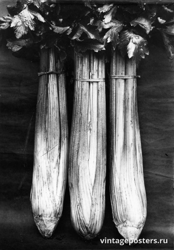 """Винтажный Ретро Постер """"Пучки сельдерея"""" Англия 1900 для интерьера купить"""