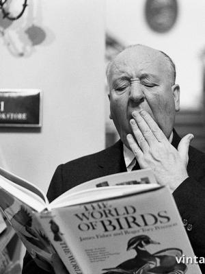 """Винтажный Ретро Постер """"Альфред Хичкок зевает над книгой про птиц"""" США 1965 для интерьера купить"""