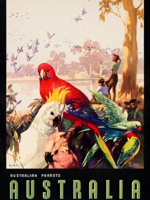 """Винтажный Ретро Постер """"Австралийские попугаи"""" Австралия 1930 для интерьера купить"""