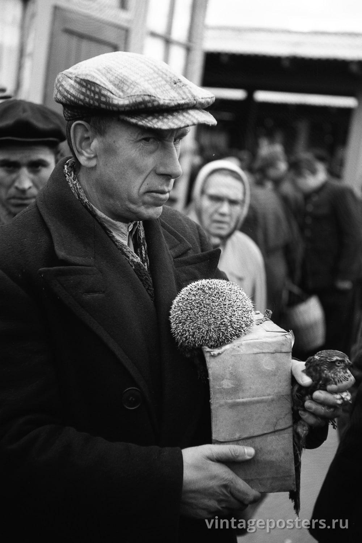 Калитниковский птичий рынок. Еж и пустельга. Москва. 1956г.