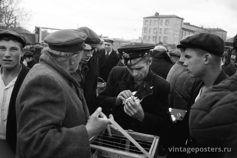 Фото старой Москвы 1950 годов: Калитниковский птичий рынок. 1956г №5