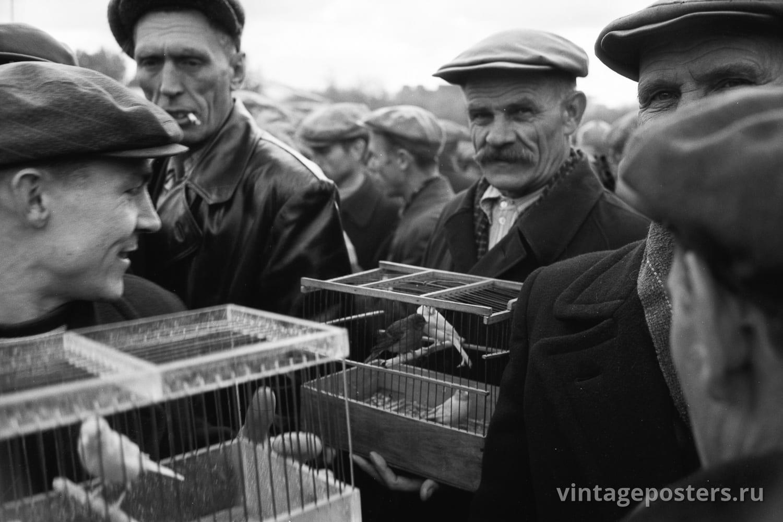 Фото старой Москвы 1950 годов: Калитниковский птичий рынок. 1956г №9