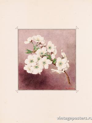 """Винтажный Ретро Постер """"Цветы сакуры сорта «Белый Снег»"""" Япония 1921 для интерьера купить"""