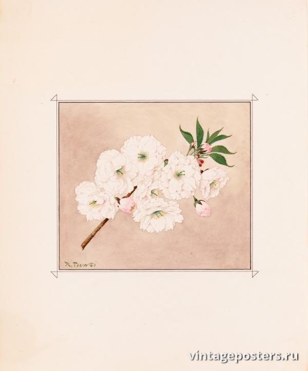 """Винтажный Ретро Постер """"Цветы сакуры сорта «Одинокий Лист»"""" Япония 1921 для интерьера купить"""
