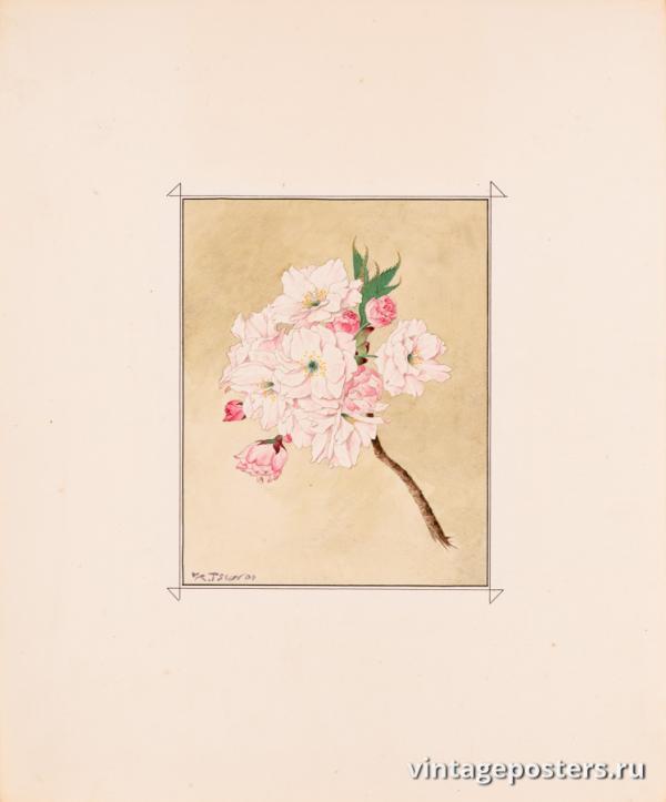 """Винтажный Ретро Постер """"Цветы сакуры сорта «Бог Долголетия»"""" Япония 1921 для интерьера купить"""