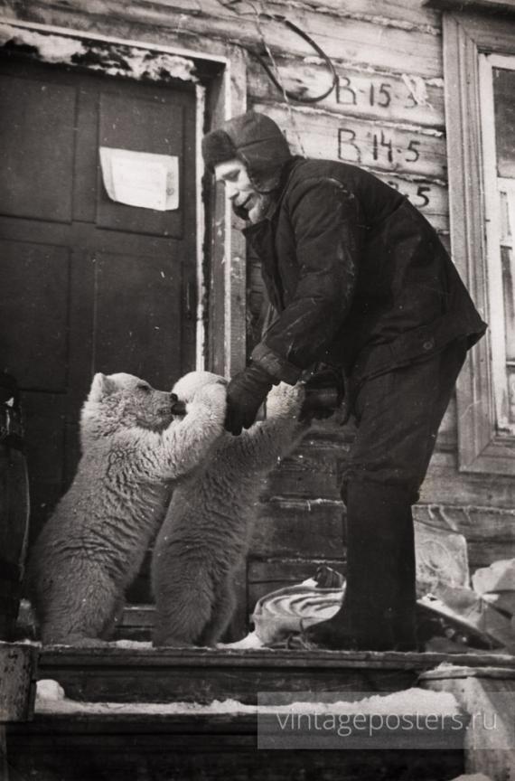 Новая Земля. Сотрудник станции кормит двух белых медвежат молоком из бутылок. 1960-е годы