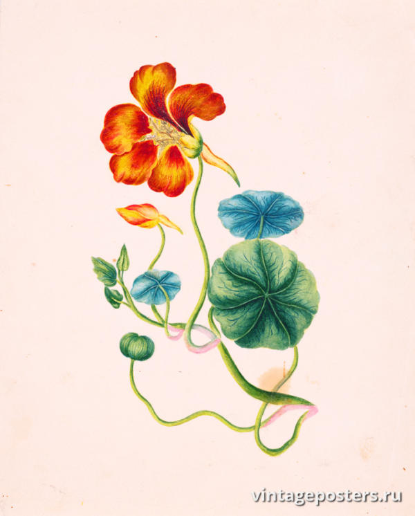 """Винтажный Ретро Постер """"Акварель Цветок на стебле с бутоном и листвой"""" Франция 1830 для интерьера купить"""