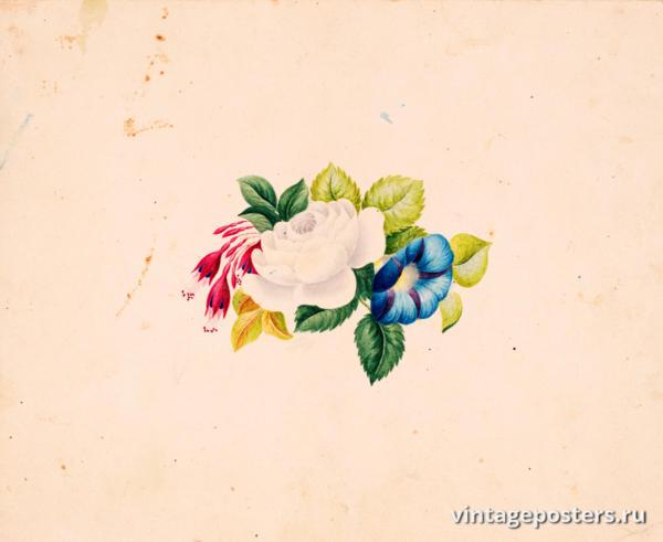 """Винтажный Ретро Постер """"Акварель Цветочная композиция с белой розой, фуксией и петунией"""" Франция 1830 для интерьера купить"""
